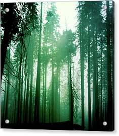 Primeval Forest Acrylic Print