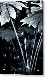 Acrylic Print featuring the photograph Primordial by Kevin Bergen