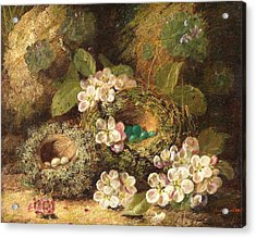 Primroses And Bird's Nests On A Mossy Bank Acrylic Print by Oliver Clare