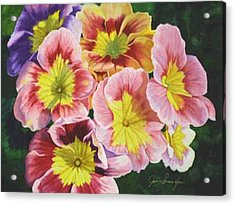 Primroses Acrylic Print by Jan  Spangler