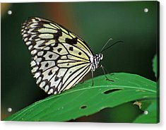 Acrylic Print featuring the photograph Prince Of The Flower  by Teresa Blanton