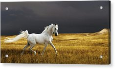 Prince Of The Plains Acrylic Print by Ron  McGinnis