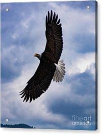 Prince Rupert Soaring Eagle Acrylic Print