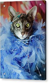 Princess Cat Acrylic Print