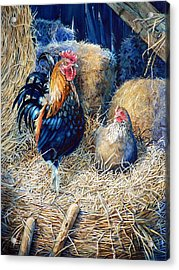 Prized Rooster Acrylic Print
