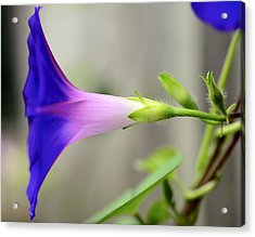 Acrylic Print featuring the photograph Profile by Corinne Rhode