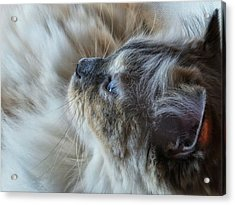 Profile Acrylic Print by Karen Stahlros