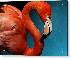 Profile Of An American Flamingo Acrylic Print