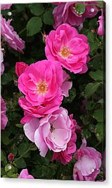 Acrylic Print featuring the photograph Profusion Of Pink by Doris Potter