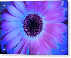 Acrylic Print featuring the photograph Promises Of Blue And Pink by Christi Kraft