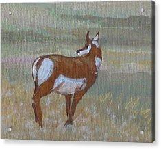 Prong Horned Antelope Acrylic Print
