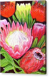 Protea Flowers #240 Acrylic Print by Donald k Hall