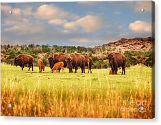 Protecting The Young Acrylic Print by Tamyra Ayles
