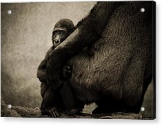 Protection Acrylic Print by Animus  Photography
