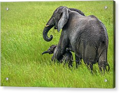 Protective Elephant Mom Acrylic Print