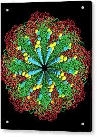 Protein Nanotube Acrylic Print by Nasa
