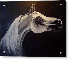 Proud Arabian Stallion Acrylic Print by Glenda Smith