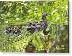 Acrylic Print featuring the photograph Proud Mama by Kate Brown