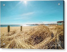 Provincetown Harbor Acrylic Print