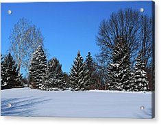 Provincial Pines Acrylic Print