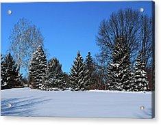 Provincial Pines Acrylic Print