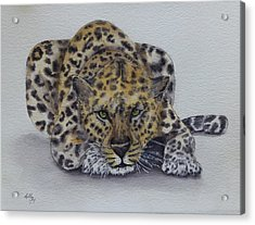 Prowling Leopard Acrylic Print