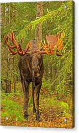 Prowling Through The Forest Abstract Acrylic Print by Tim Grams