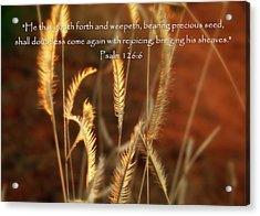 Psalm 126 6 Grain Acrylic Print