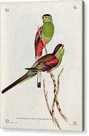 Psephotus Pulcherrimus Acrylic Print by John Gould