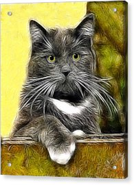 Pssst ... Where's The Treats Acrylic Print by Madeline  Allen - SmudgeArt