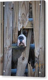 Psst Help Me Outta Here Acrylic Print