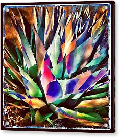 Psychedelic Agave Acrylic Print by Paul Cutright