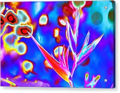 Psychedelic Bird Of Paradise With Bokeh Acrylic Print