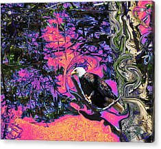 Psychedelic Eagle Acrylic Print by Wilbur Young