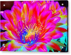 Psychedelic Pink Flower Acrylic Print