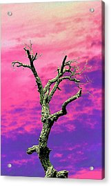Psychedelic Tree Acrylic Print by Richard Patmore