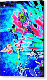Psycho Daisy Acrylic Print by Richard Henne
