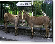 Public Toilet Acrylic Print by John Greim