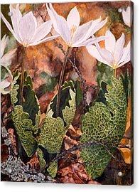 Puccoon Acrylic Print by Thomas Akers