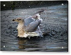 Puddle Bath Acrylic Print