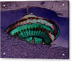 Puddle Needle Acrylic Print by Tim Allen