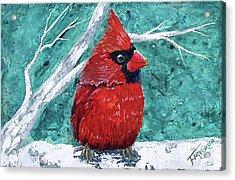 Pudgy Cardinal Acrylic Print