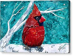Pudgy Cardinal Acrylic Print by T Fry-Green