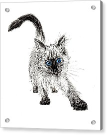 Pudsquiz Belina On The Prowl  Acrylic Print by Vincent Alexander Booth