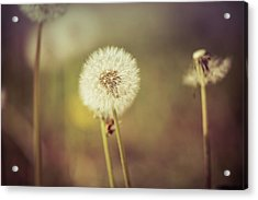 Acrylic Print featuring the photograph Puffer by Lora Lee Chapman