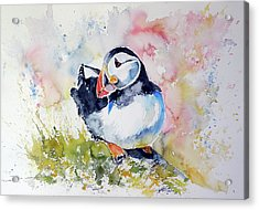 Puffin On Stone Acrylic Print