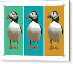 Puffin Trio Pop Art Acrylic Print by Michael Tompsett