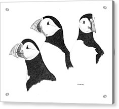 Puffins Acrylic Print by Ed Einboden
