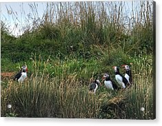 Puffins - Iceland Acrylic Print by Joana Kruse