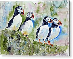 Puffins On Stone Acrylic Print